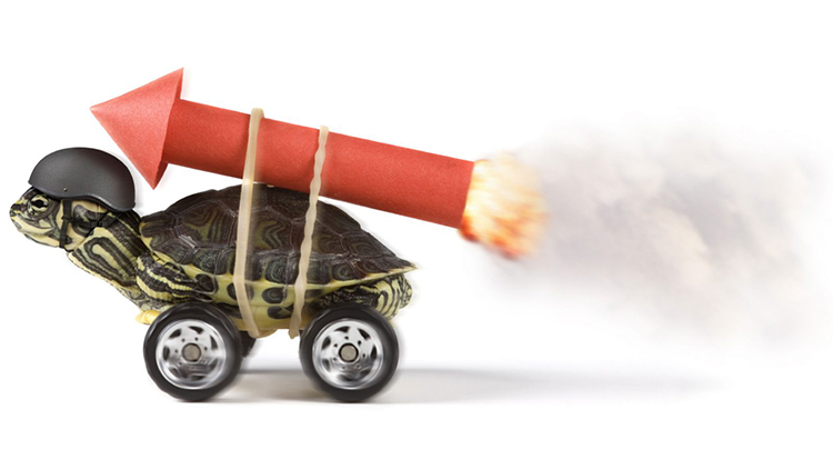 Funny image of turtle with rocket on its back simulating how content marketing can rocket you internet marketing results